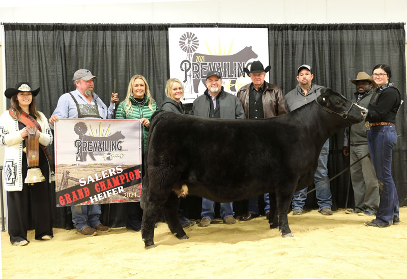 Grand Champion Salers Female